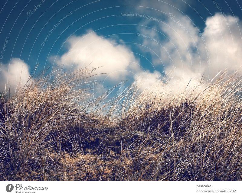 Nature Blue Summer Ocean Landscape Grass Coast Sand Air Gold Authentic Island Cool (slang) Sign Infinity Fantastic