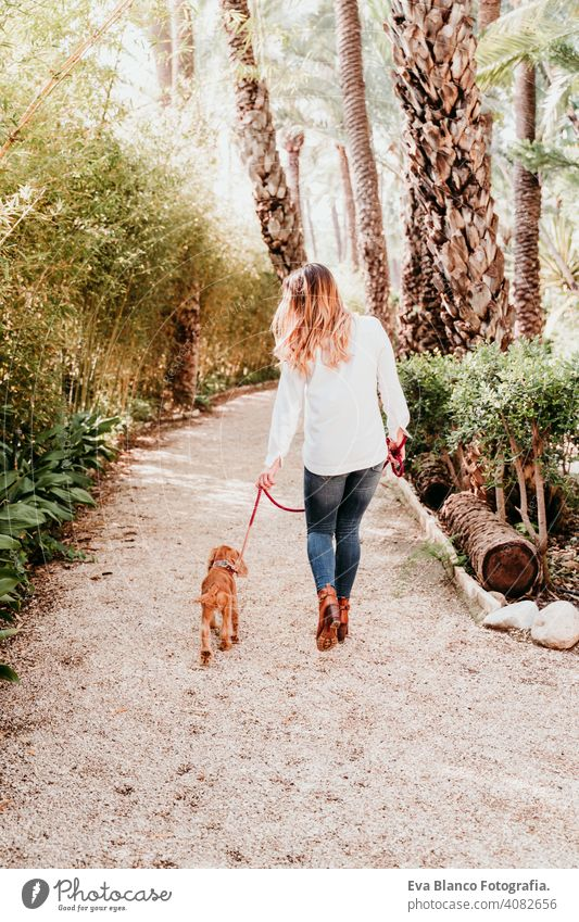 young woman walking with her cute puppy of cocker spaniel outdoors dog pet park sunny love hug smile back view kiss breed purebred beautiful blonde brown