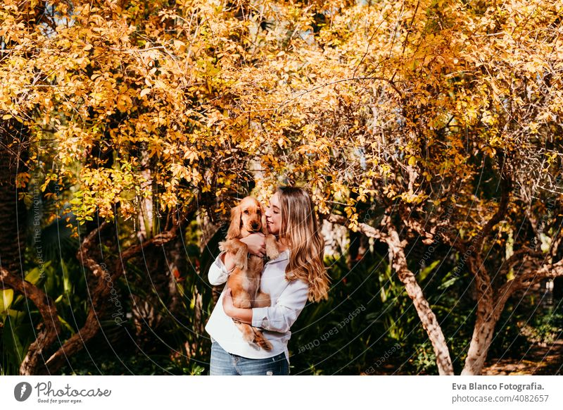 young woman and her cute puppy cocker spaniel dog outdoors in a park. Sunny weather, yellow leaves background pet sunny love hug smile kiss breed purebred