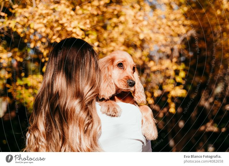 young woman and her cute puppy cocker spaniel dog outdoors in a park. Sunny weather, yellow leaves background pet sunny love hug smile back view kiss breed