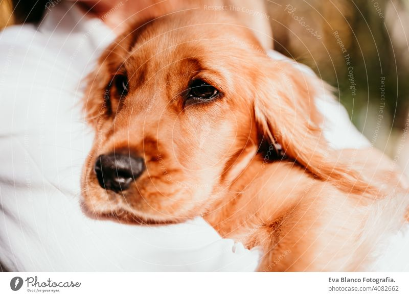 young woman and her cute puppy cocker spaniel dog outdoors in a park. Sunny weather. pet sunny love hug smile kiss breed purebred beautiful blonde brown