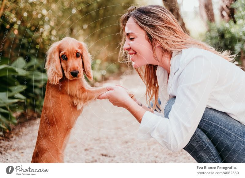 young woman and her cute puppy of cocker spaniel outdoors in a park paws high five dog pet sunny love hug smile kiss breed purebred beautiful blonde brown