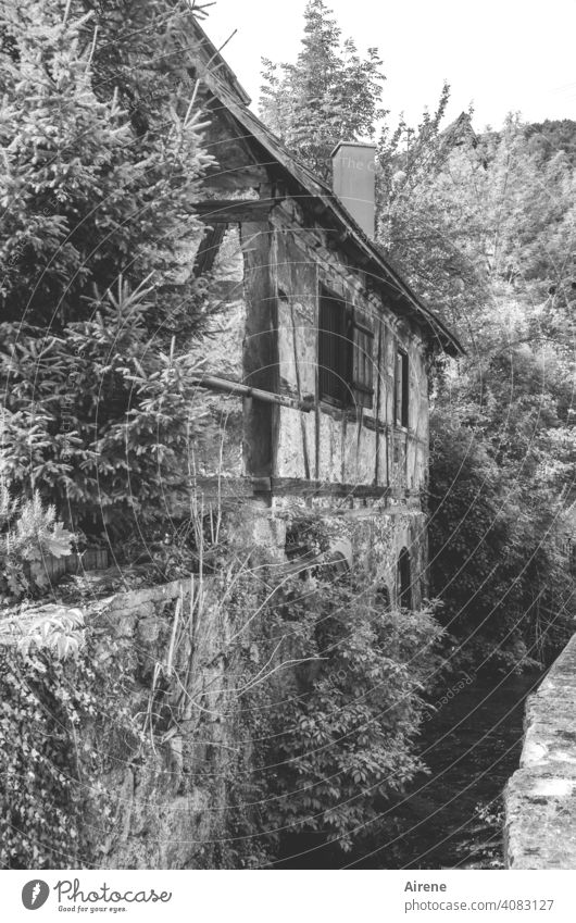 Nothing rattles anymore, nothing hisses Mill Old half-timbered idyllically Brook millstream Historic trees Feral Old town Small Town Rural romantic Romance