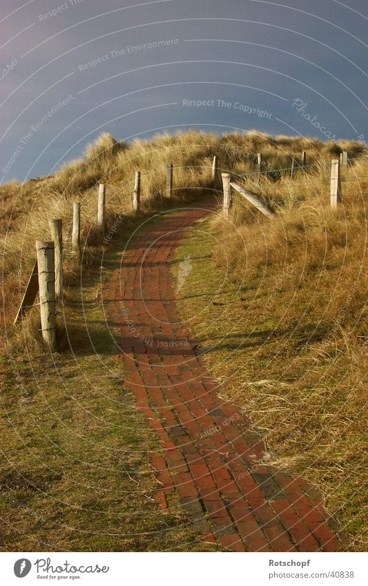 Way to the dunes Evening sun Dusk Lanes & trails Beach dune North Sea To go for a walk