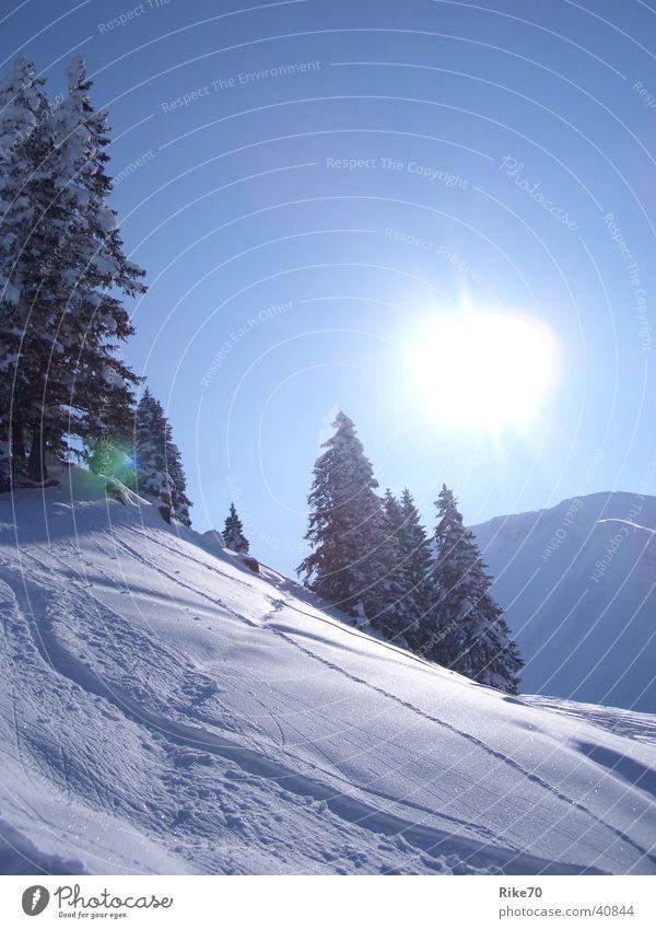 Blue Sun Winter Snow Mountain Fir tree