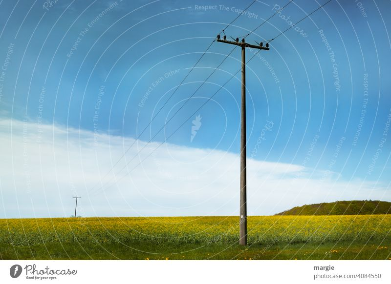 Old power poles over flowering fields Electricity pylon Transmission lines Energy industry Cable Clouds Technology High voltage power line Power transmission