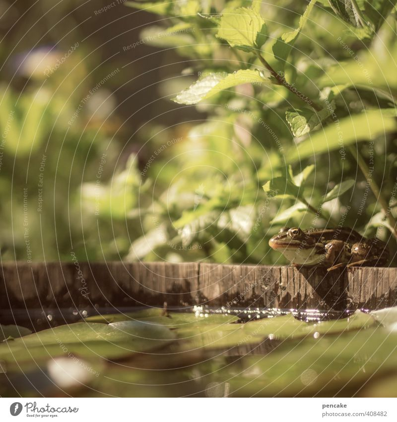 Nature Green Water Plant Summer Animal Warmth Small Garden Brown Wild animal Beautiful weather Fresh Elements Cute Sign