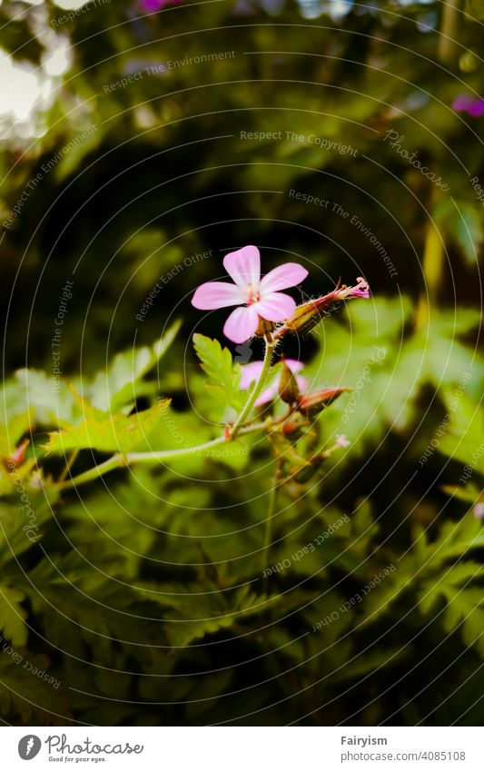 One lonely flower in front of a botanical background Background picture colorful photography color Flower power Flower field blossom dream lilac blossom