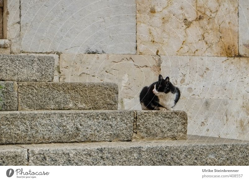 Cat City Old Loneliness Animal Stone Facade Stairs Sit Wait Places Poverty Observe Thin Watchfulness Appetite