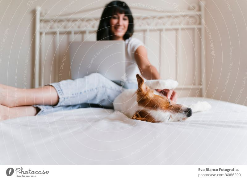 young caucasian woman on bed working on laptop. Cute small dog lying besides. Love for animals and technology concept. Lifestyle indoors jack russell home