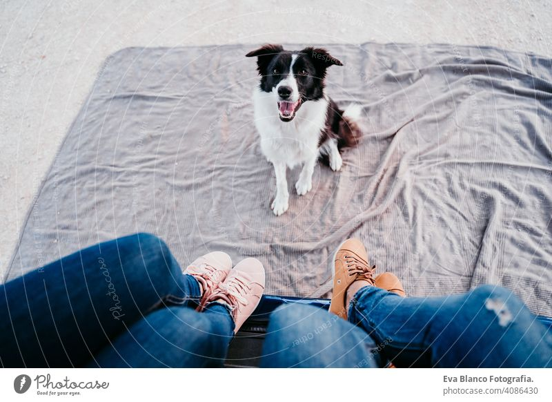 cute border collie dog and two women legs relaxing in a van. travel concept woman unrecognizable small pet van life traveling friendship together young modern