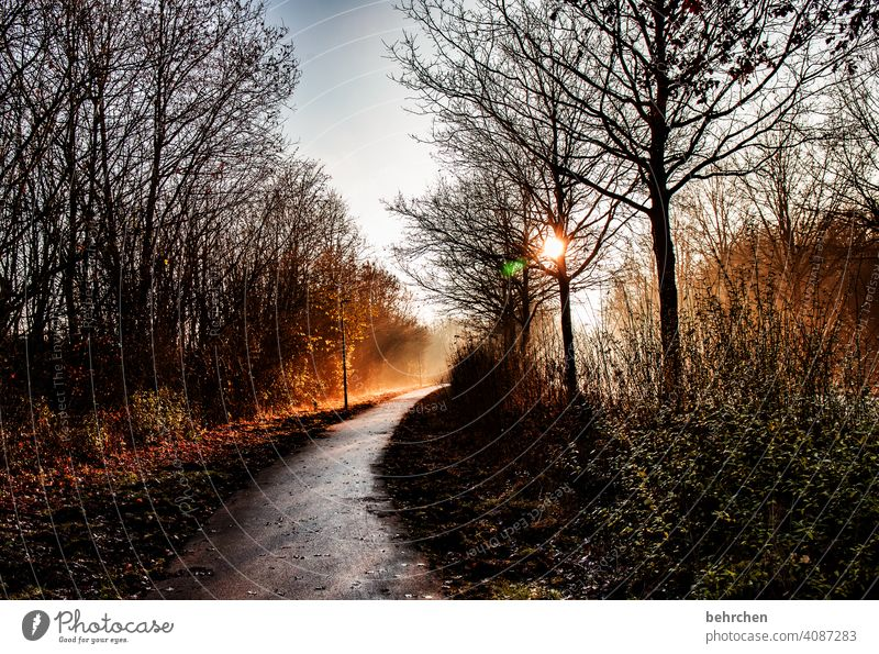 a way into the light Hope Back-light Sunrise Landscape Sky Blue sky Idyll Sunbeam Automn wood autumn walk Autumnal colours autumn mood Deserted