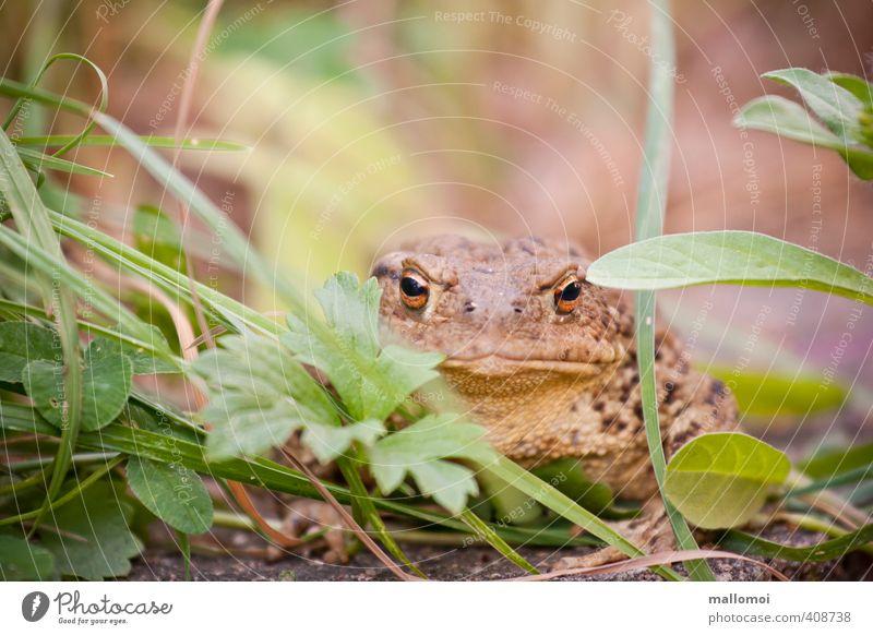Nature Green Animal Yellow Environment Eyes Grass Garden Brown Skin Sit Wild animal Wait Observe Animal face Hide