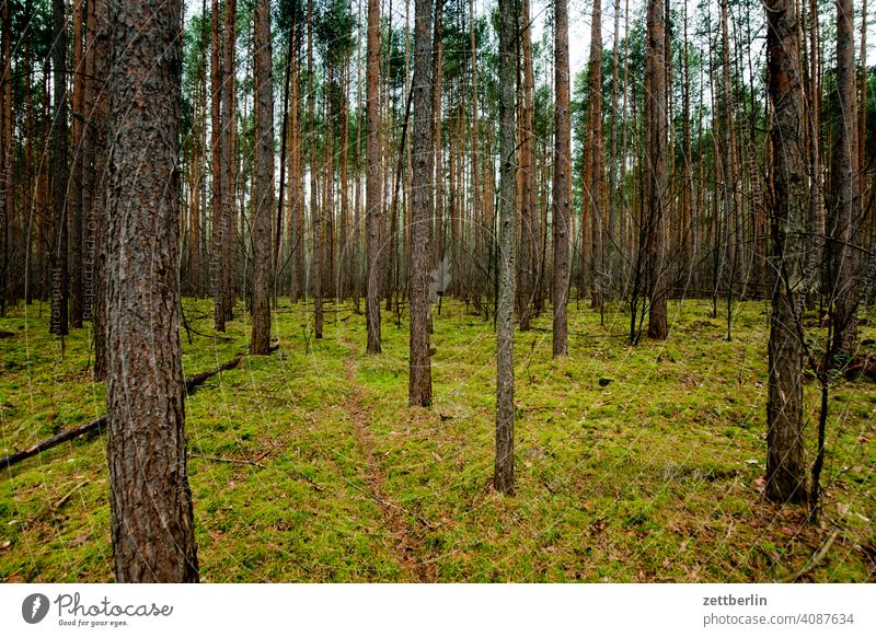 Forest in Rüdnitz Tree Germany Twilight Closing time Coniferous trees Coniferous forest Nature Park city park Copy Space Hiking hike high forest Jawbone pines