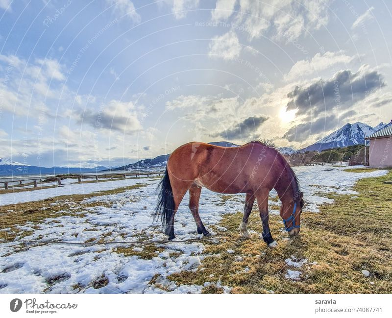 wild horse grazing calmly in winter time during sunset animal field sky Winter snow clouds eating colors mountain Wild landscape