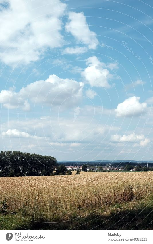 Grain field with view to Asemissen near Bielefeld in Leopoldshöhe with light blue sky and white clouds at the Teutoburg Forest in East Westphalia-Lippe Field