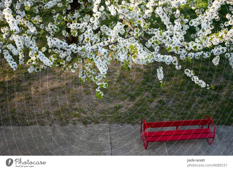 small bench under white flowers red bench Nature Spring Meadow Concrete slab Blossoming Bird's-eye view Cherry tree
