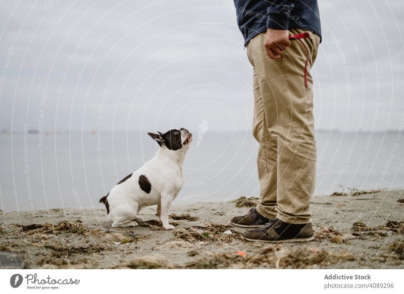 Crop man playing with dog on beach sea sand standing pet french bulldog male owner fun animal nature water friend canine purebred pedigree guy casual lifestyle