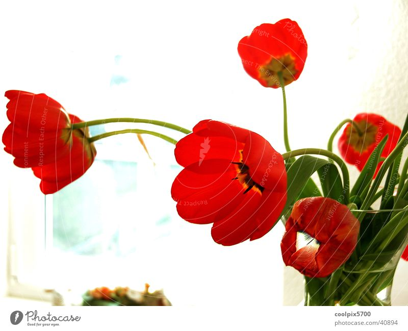 Nature Flower Red Colour