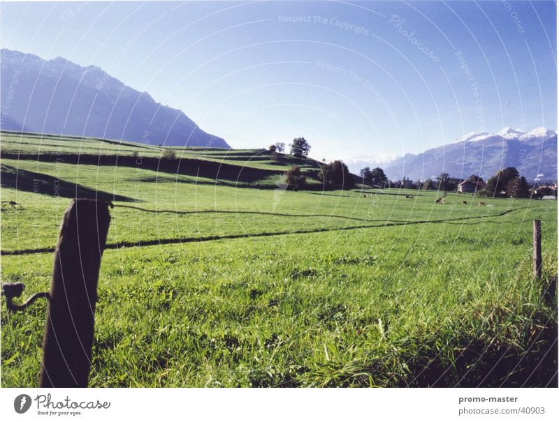 Idyllic Liechtenstein Meadow Field Pasture Lichtenstein Ash-tree Mountain