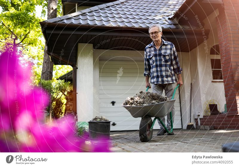 Senior man pushing wheelbarrow while working in his yard senior elderly grandfather old pensioner retired retirement aged mature home house male people