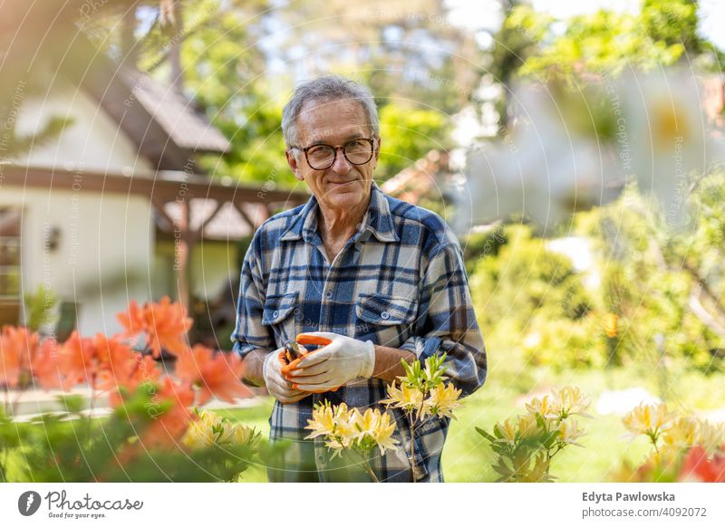 Mature man working in the garden senior elderly grandfather old pensioner retired retirement aged mature home house male people lifestyle domestic life