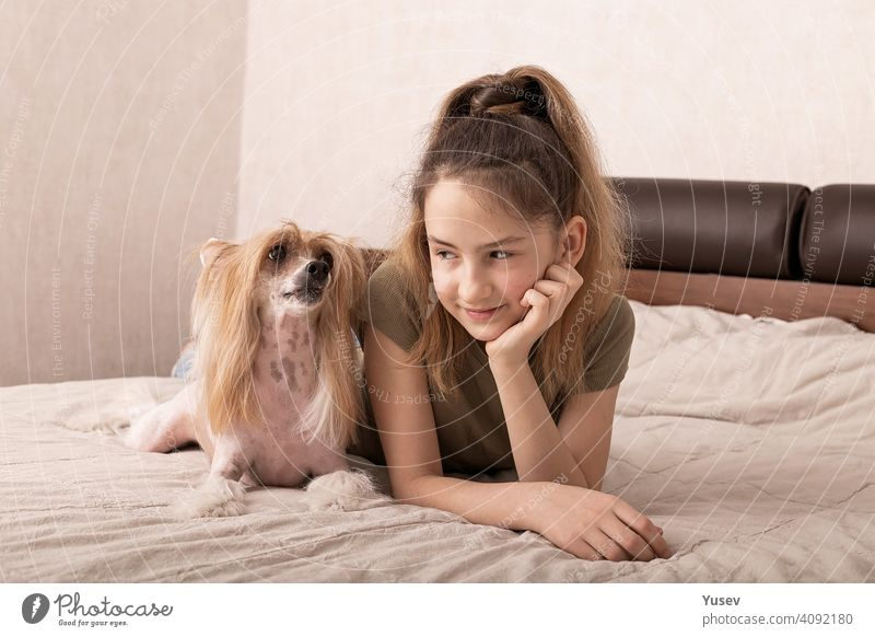 Beautiful smiling caucasian girl is laying on a bed with her cute dog pet. Chinese crested, hairless puppy, family friend, indoor activity, portrait. Front view.