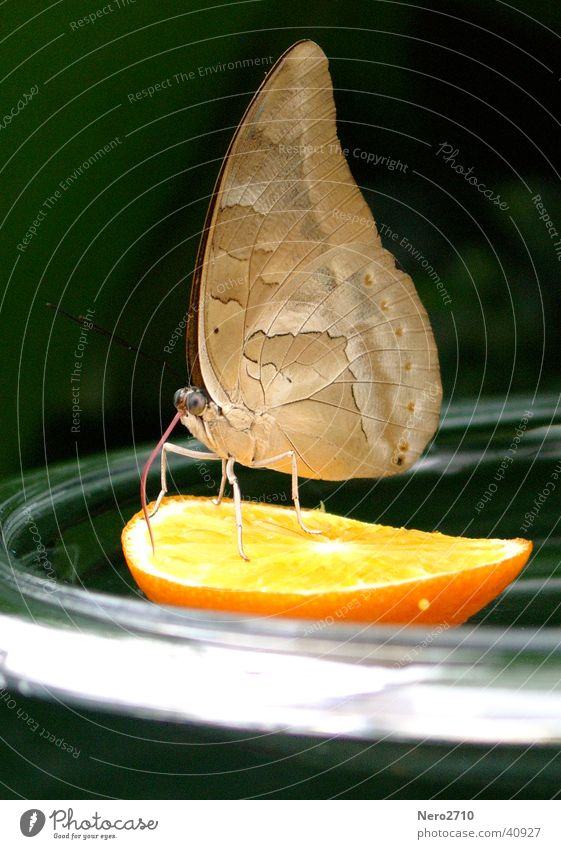 Orange Insect Butterfly