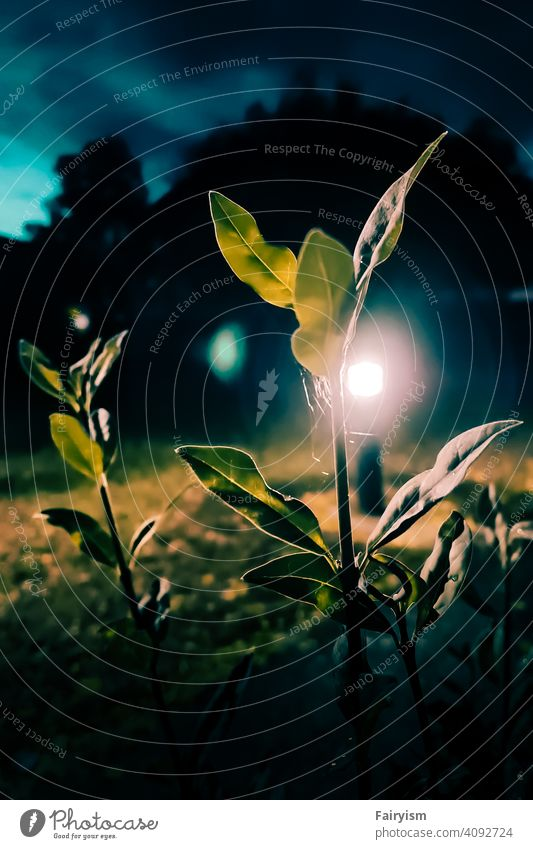 Urban plant in night lights Photography photocase Photographer fine arts Mood lighting moody weather moody atmosphere moods mood maker nature lovers Moody