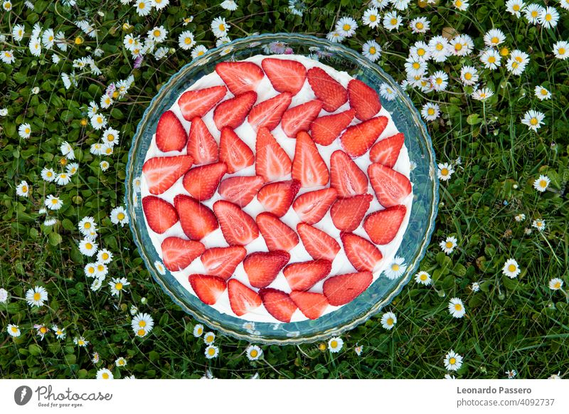 Strawberries tiramisu on a field of daisies in spring Strawberry strawberries strawberries fruits Cake Spring Spring flower Daisy daisy flowers Green Red White