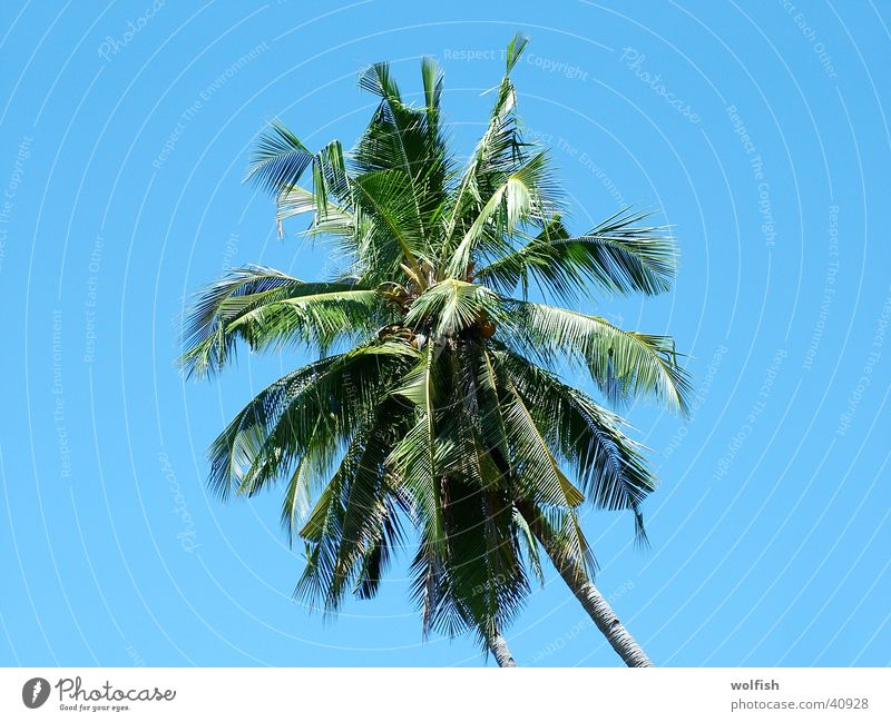 palm Palm tree Palm frond Treetop Asia Vacation & Travel Sky