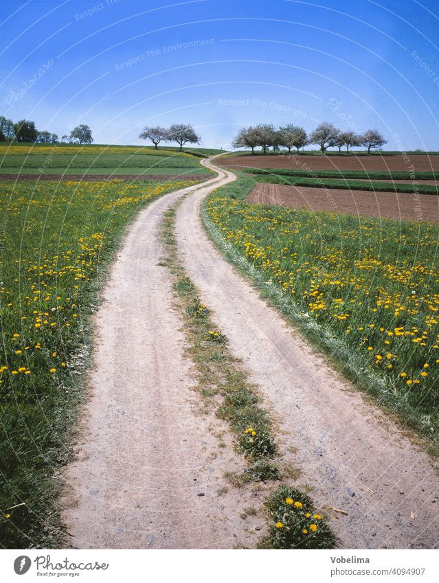 Field path in the Odenwald off Summer Country life Hesse acre fields off the beaten track Direction Line Curve trees Spring spring Landscape Germany Europe