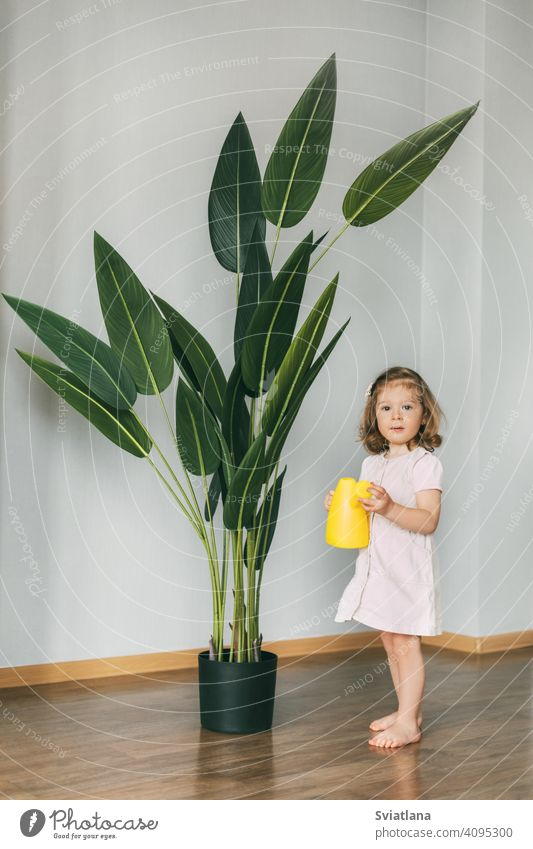 Little girl waters flowers at home, helps care for plants toddler child little kid cute watering can little florist happy holding domestic greenery