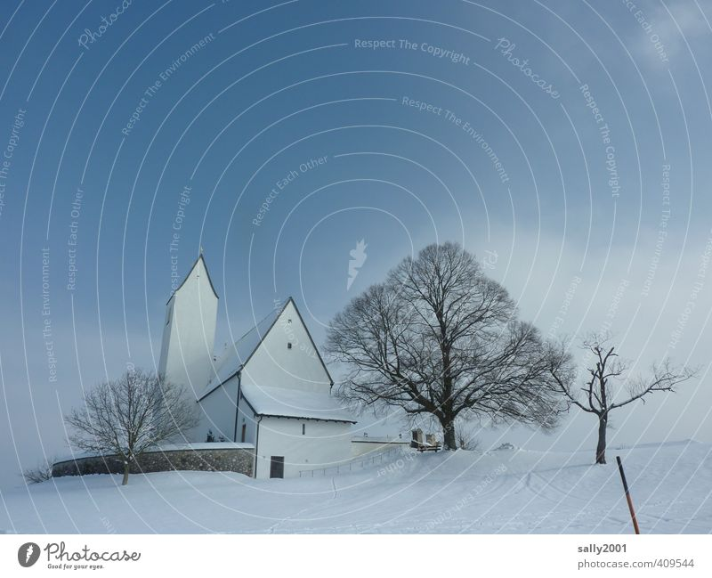 White Tree Loneliness Calm Winter Snow Death Sadness Religion and faith Ice Beautiful weather Church Safety Frost Eternity Protection