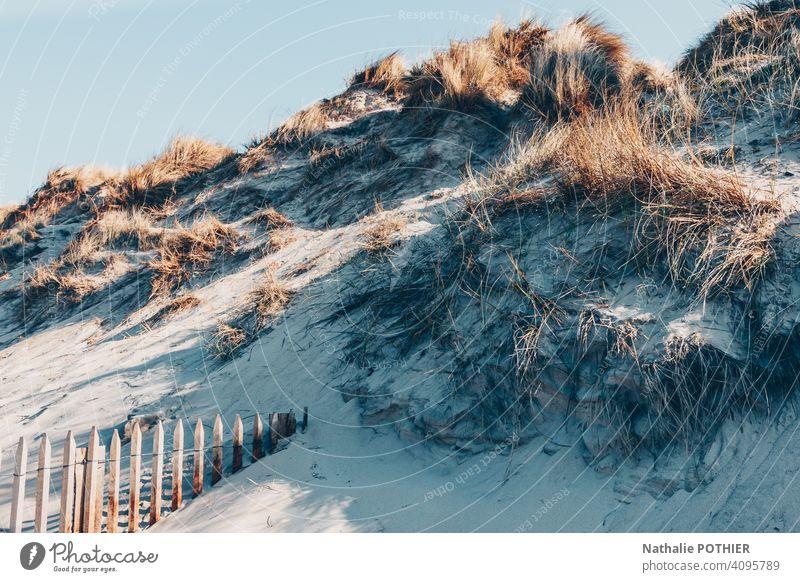 Dunes on the Opal Coast in France dune coast sea Beach North Sea Sand Ocean North Sea coast Landscape Exterior shot Colour photo Tourism Day Vacation & Travel