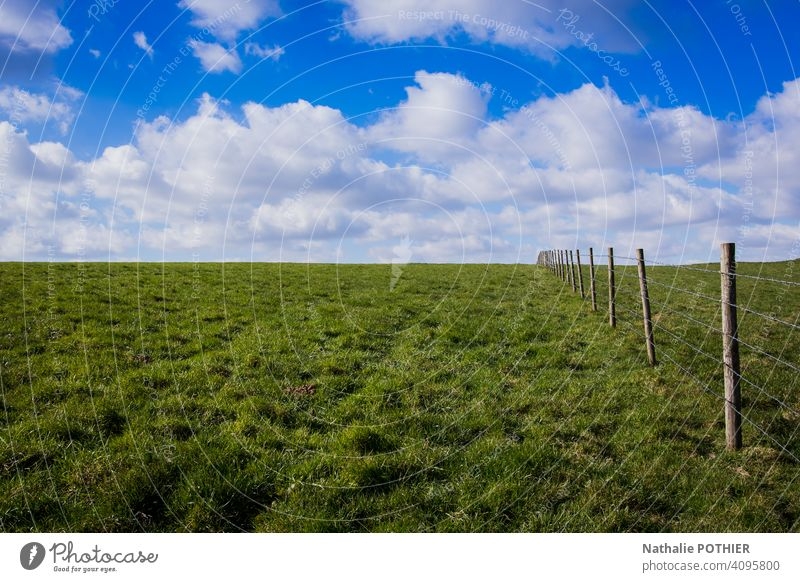 Meadow with fence and blue sky Summer Grass Clouds Landscape Blue Sky Fence Nature Green Exterior shot Beautiful weather Field Sunlight Environment Pasture Day