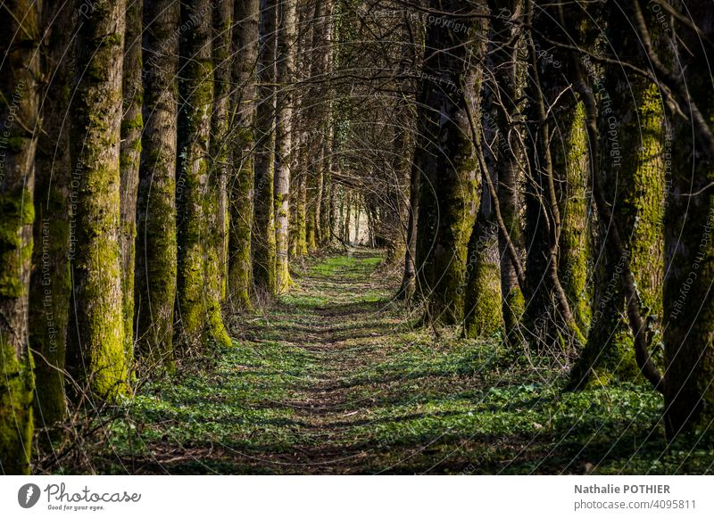 Path in the forest path Nature trees green Exterior shot Tree nature Forest Landscape Colour photo Plant Environment Deserted Green Shadow Day Sunlight Calm
