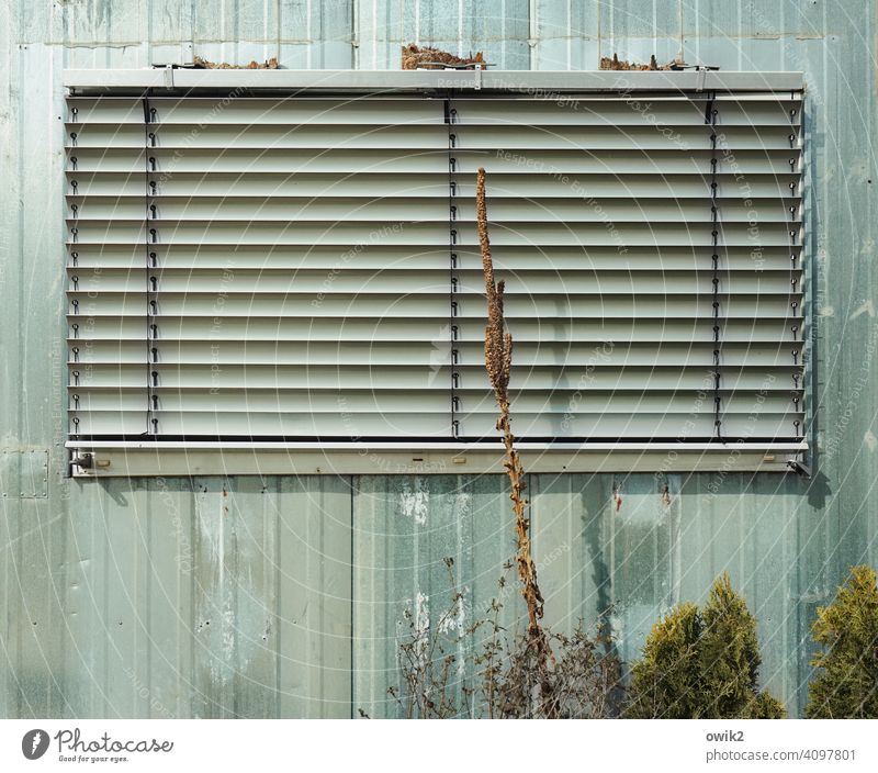 Tight Window Venetian blinds too Closed Facade Roller blind House (Residential Structure) Exterior shot Wall (building) Deserted Roller shutter Shadow
