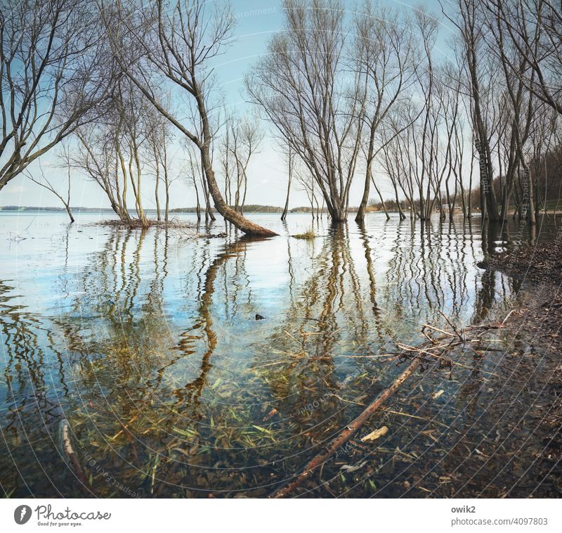 Louisiana trees Water land under twigs wet feet High tide flooded Deluge branches Spring Surface of water Reflection Sky Horizon Reflection in the water