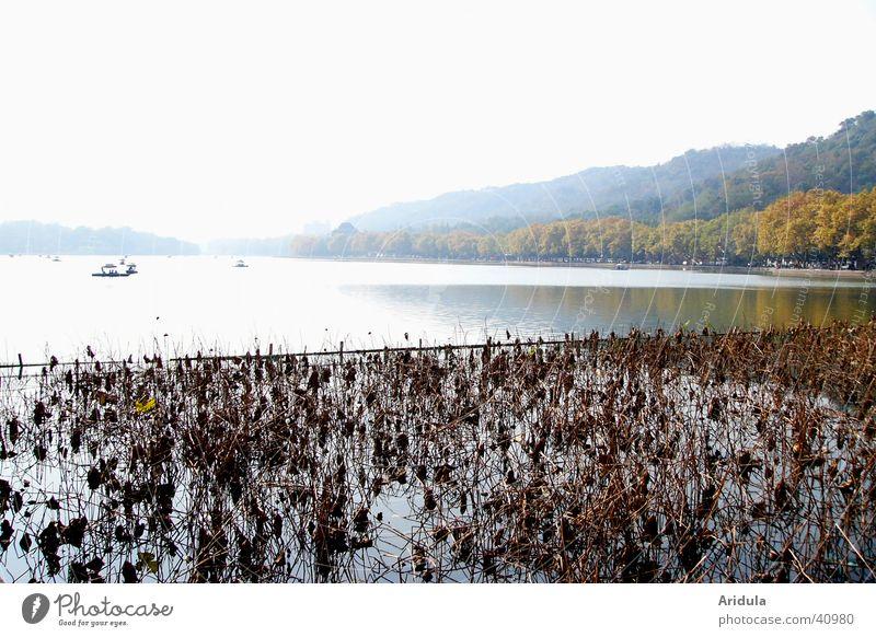 nature_03 Lake Hill Back-light China Forest Hangzhou Aquatic plant Asia Landscape Water Coast west-lake