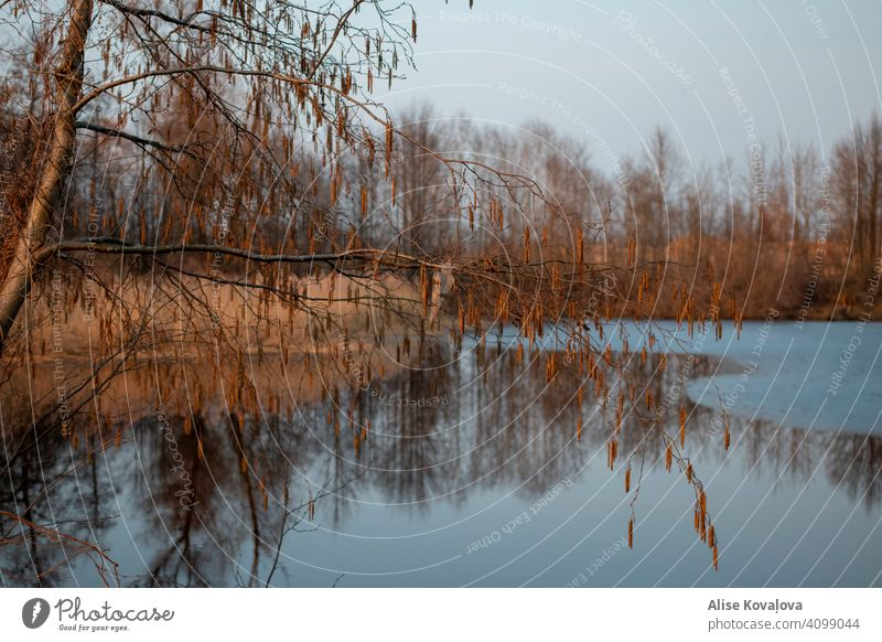 spring evening by a pond Water Pond Lake Tree Reflection Nature Water reflection Landscape Lakeside Calm Colour photo Sky Beautiful weather evening mood