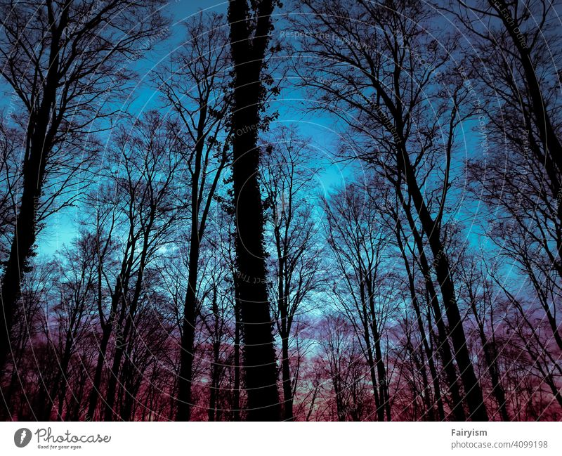 tree silhouettes in a very colorful light background Garden Sky Nature Wild plant sunset landscape sunset mood Sunlight Sky blue Colour photo Abstract Sky only