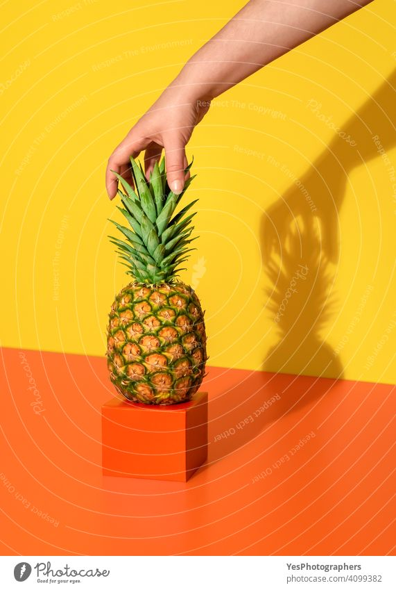Pineapple minimalist in bright light. Woman hand grabbing the pineapple. ananas background colorful colors concept copy space creative cut out delicious dessert