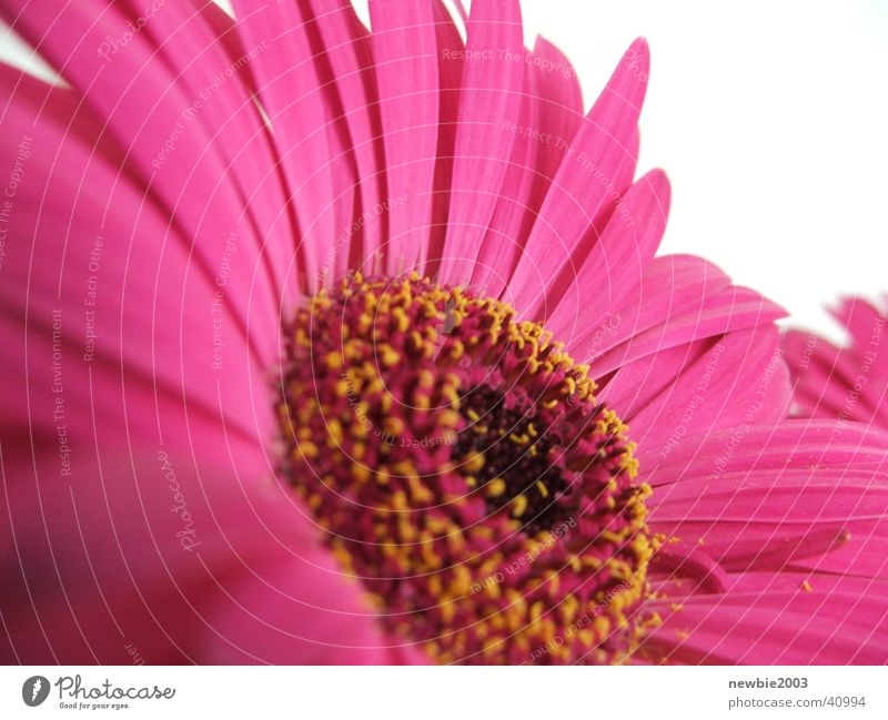 flower power pink flower Purple Flower