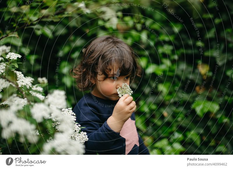 Cute girl smelling flower Girl 1 - 3 years Caucasian Flower Spring Spring fever Spring flower Curiosity explore Colour photo Exterior shot Child Nature Day