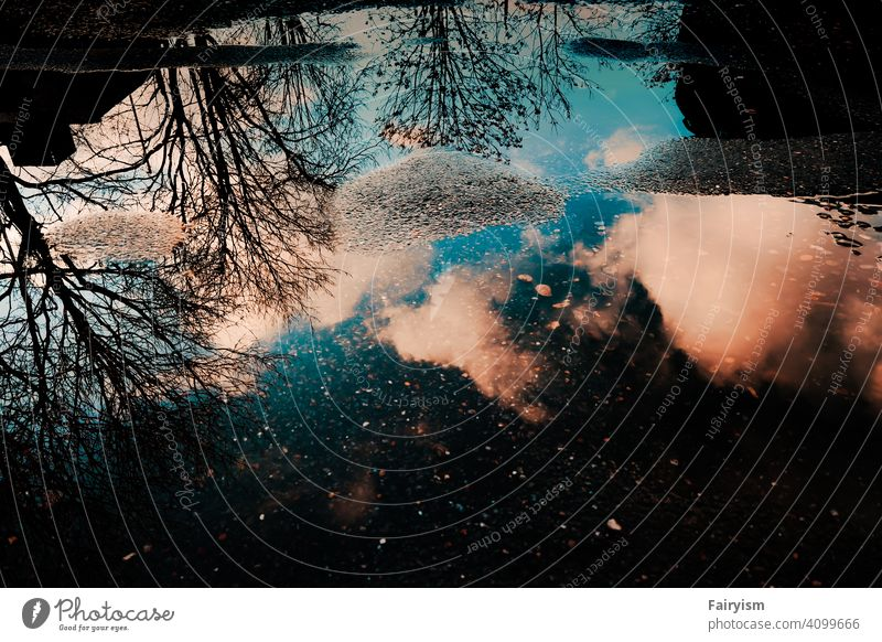 a reflection of trees and the sky in water Fine Art fine art photography Moody Nature photo Landscape Exterior shot Sunlight Abstract mood maker moody weather