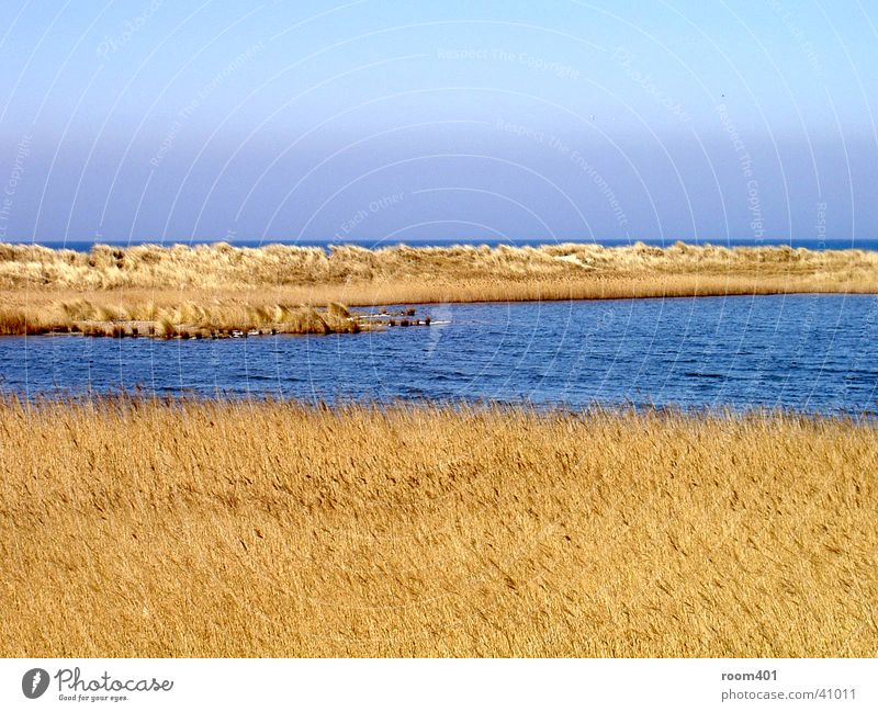 Water Ocean Calm Grass Common Reed Dry Beach dune Smooth