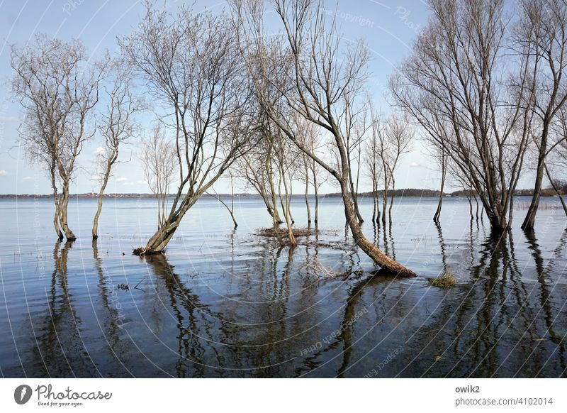 delta trees Water land under Deluge flooded High tide wet feet twigs branches Spring Surface of water Reflection in the water Sky Horizon Lakeside Reservoir