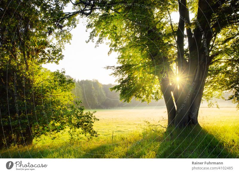 A landscape at sunrise north of Berlin. Through the branches of a beech shines the rising sun. Sunrise Sunbeam Spring Beech tree Green Deserted Meadow Forest