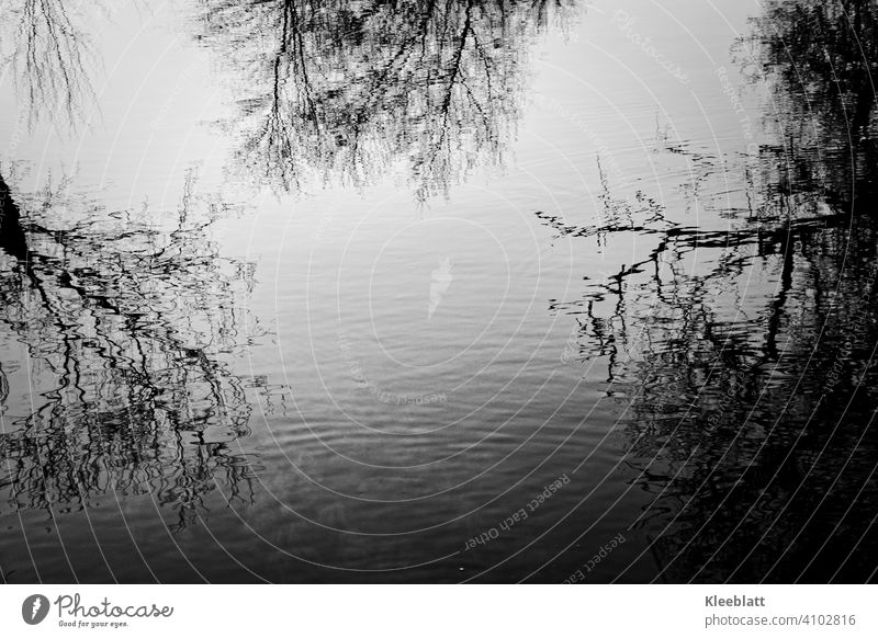 Black and white shot of bare tree tops reflected in the water Tree tops Bald, Reflection, Water, Nature Reflection in the water Sky Deserted Lake reflection